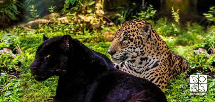 Foto Jaguares